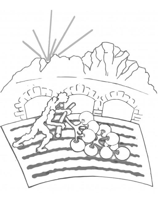 Valcamonica Bianco Riesling 2015 Videt Concarena